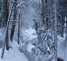 Brrr..its cold by AllisonRhodes