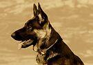 Puppy Indy 2 by Sandy Keeton