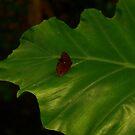 Leaf by jomash