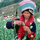 Mien woman harvesting opium poppy. by John Spies