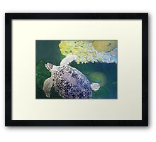 Sea Turtle on Lime Green Framed Print
