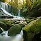 The woodland stream - drifting water