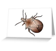 Stink Bug, in color Greeting Card