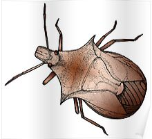 Stink Bug, in color Poster