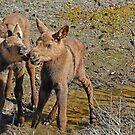 Moose Kisses by Dyle Warren