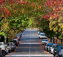 Autumn in Erskineville by Alexander Meysztowicz-Howen