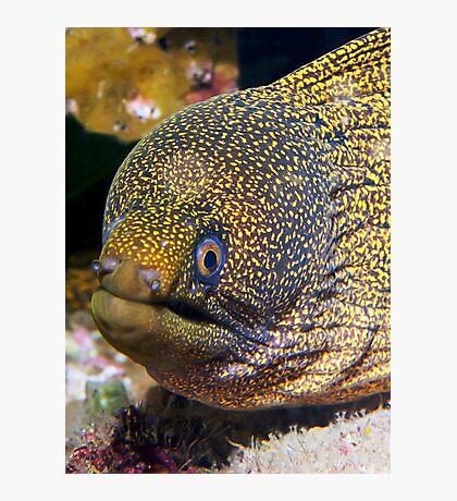 Moray Eel Photographic Print