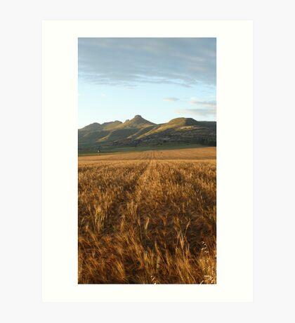Clarens, South Africa: Wheatfields Art Print