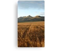 Clarens, South Africa: Wheatfields Canvas Print