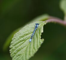 Dragon Fly by GPMPhotography