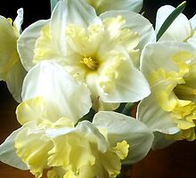 Daffodils in a Jar 2 by M Sylvia Chaume