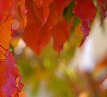 Autumn Triptich III by Lorraine Seipel
