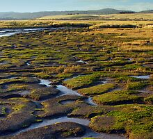 Wetlands, Launceston, Tasmania. by colin gillies