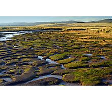 Wetlands, Launceston, Tasmania. Photographic Print