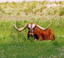 Longhorn by Jody Johnson
