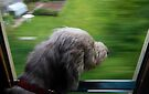 High speed dog by SWEEPER