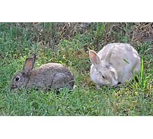 Bunny Buddies Photographic Print