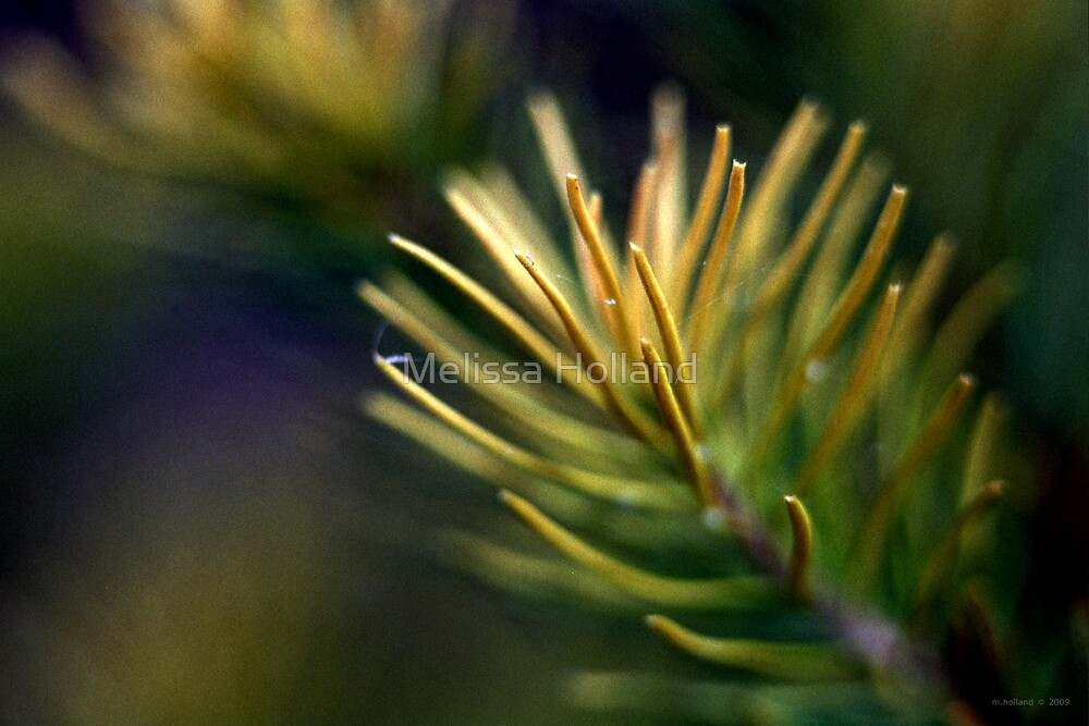Bottle Brush Leaves - Close Up by Melissa Holland