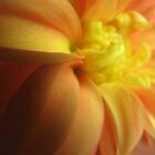 sunset on dahlia by jade adams