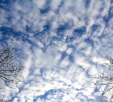 Winter Day by Jeremy Davis