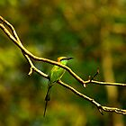 Keep a green tree in your heart and perhaps a singing bird will come. by Ritu Lahiri