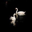 Duet... by LindaR