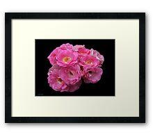 Roses on Black Velvet Framed Print