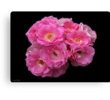 Roses on Black Velvet Canvas Print