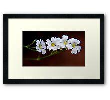 Janis' Flowers Framed Print