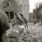 Bird feed.. by Lydia Griffiths