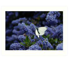 White Butterfly on the Humming Bush Art Print
