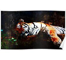 CAT NAP ... tiger Poster