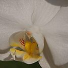 White Orchid Close Up by Robert Abraham