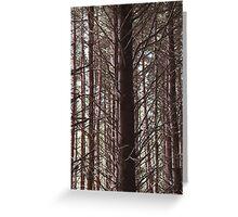 Trees, trees, trees Greeting Card