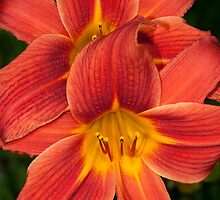 Day Lily Twins by Bonnie T.  Barry