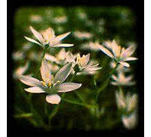 star of david flowers Photographic Print