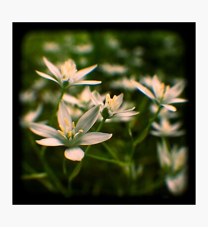 star of david flowers Photographic Print