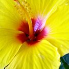 Yellow Hibiscus Detail by Tim Stringer