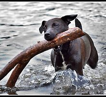 Is this the stick you threw dad? by Shaun Whiteman
