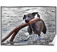 Is this the stick you threw dad? Poster