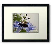 Natures experiments Framed Print
