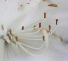 White beauty by Kimberley  x ♥ Davitt