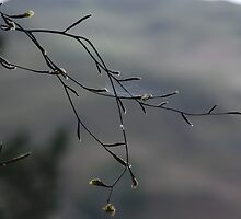 Spring Web in Ambleside by APhotography