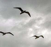Gulls fly in a stormy sky...... by lynn carter