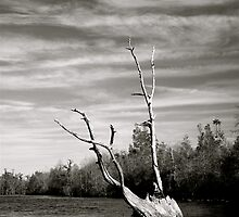 Like Driftwood in the Okeephenokee Swamp by ptpatty