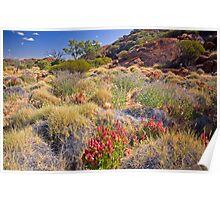 Outback Garden Poster
