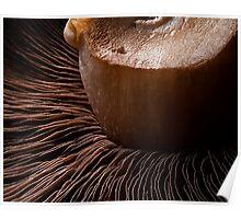 Mushroom Wafers Poster