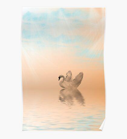 Swan Swim Poster