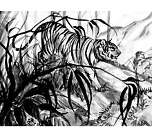 Prowling Tiger Photographic Print