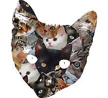 Cat Cat Photographic Print
